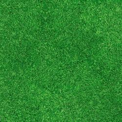 Expodeko, Grass